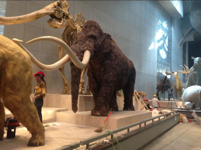 上海自然博物馆亚博体育网页登录